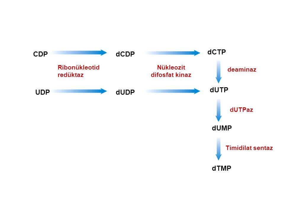 Nükleozit difosfat kinaz