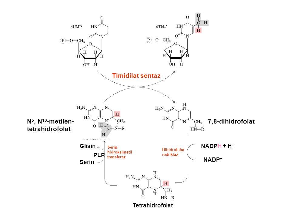 N5, N10-metilen-tetrahidrofolat 7,8-dihidrofolat