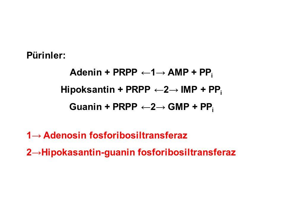 Adenin + PRPP ←1→ AMP + PPi Hipoksantin + PRPP ←2→ IMP + PPi