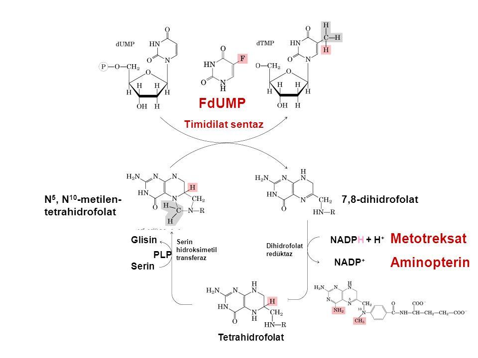 FdUMP Metotreksat Aminopterin Timidilat sentaz