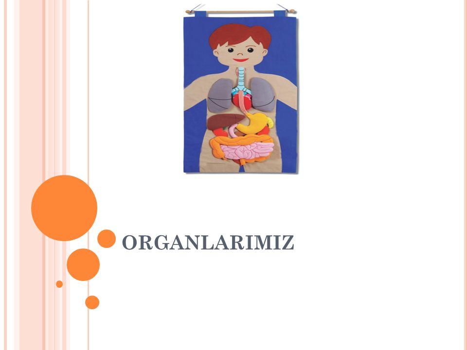 ORGANLARIMIZ