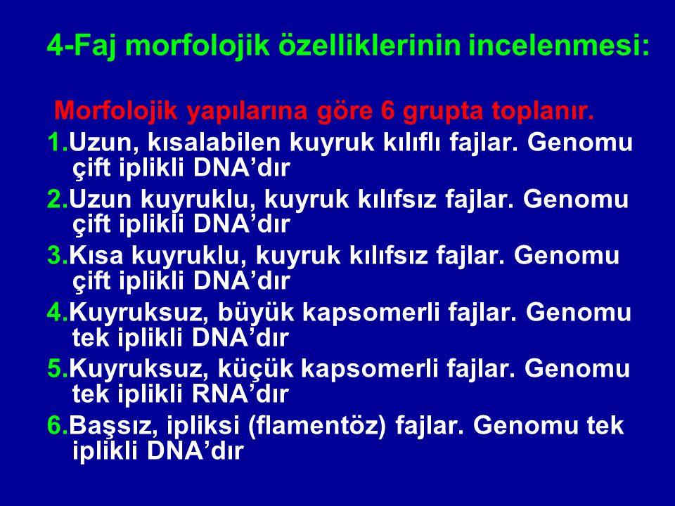 4-Faj morfolojik özelliklerinin incelenmesi: