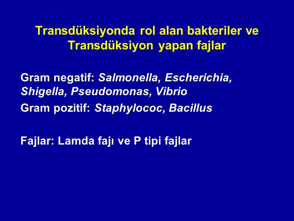 Transdüksiyonda rol alan bakteriler ve Transdüksiyon yapan fajlar