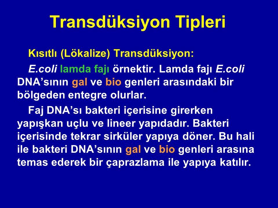 Transdüksiyon Tipleri