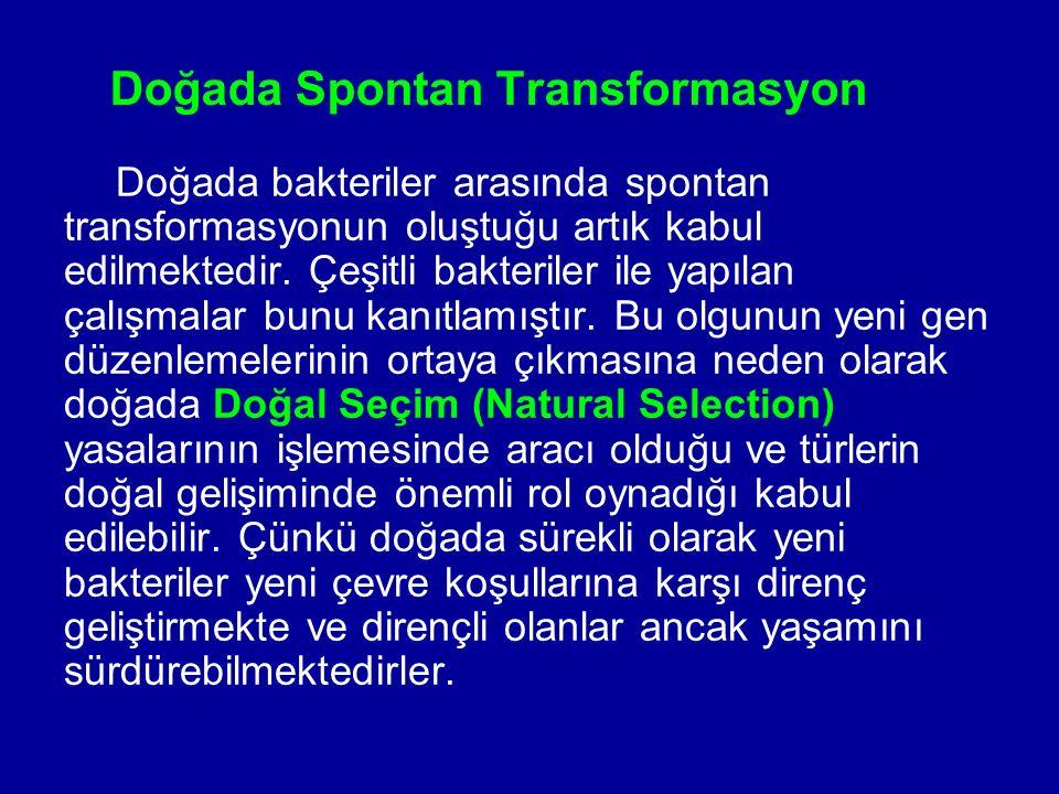 Doğada Spontan Transformasyon