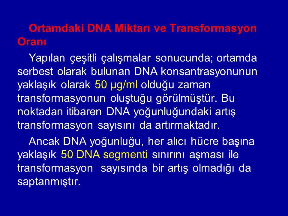 Ortamdaki DNA Miktarı ve Transformasyon Oranı