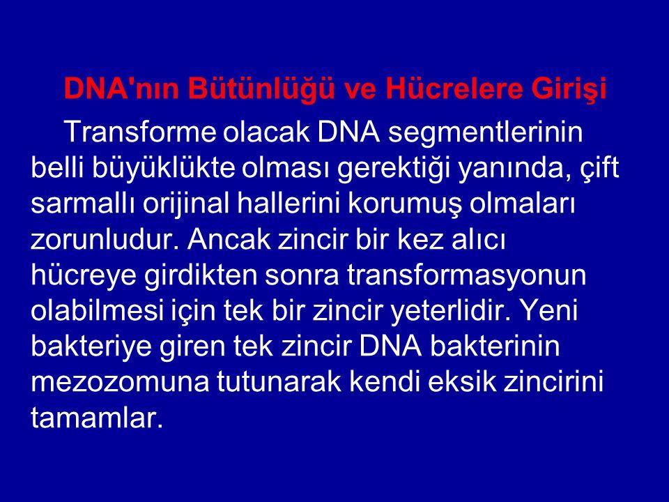 DNA nın Bütünlüğü ve Hücrelere Girişi