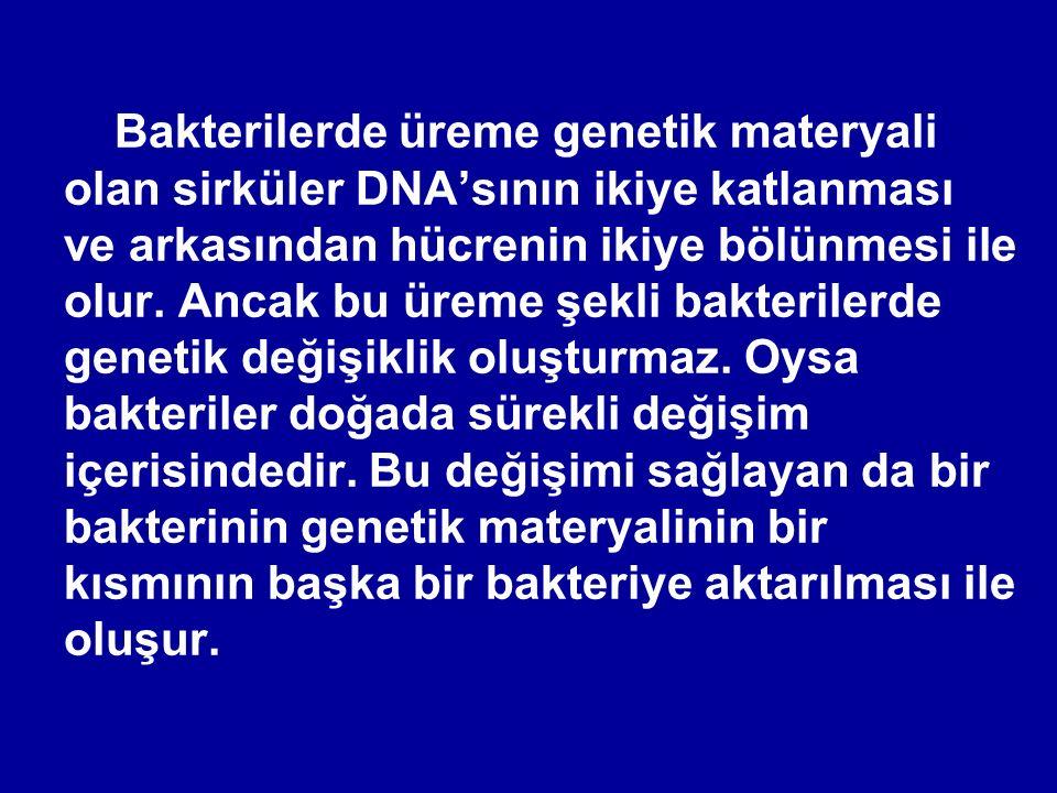 Bakterilerde üreme genetik materyali olan sirküler DNA'sının ikiye katlanması ve arkasından hücrenin ikiye bölünmesi ile olur.