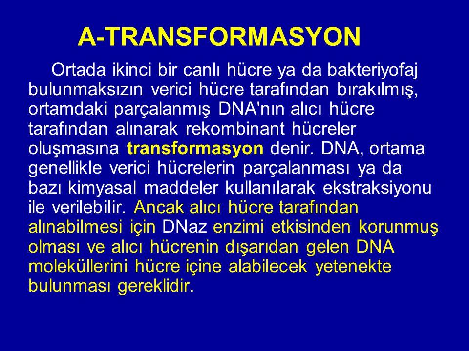 A-TRANSFORMASYON