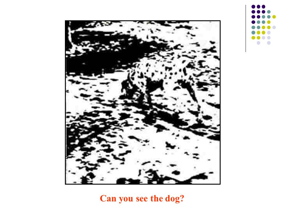 Can you see the dog
