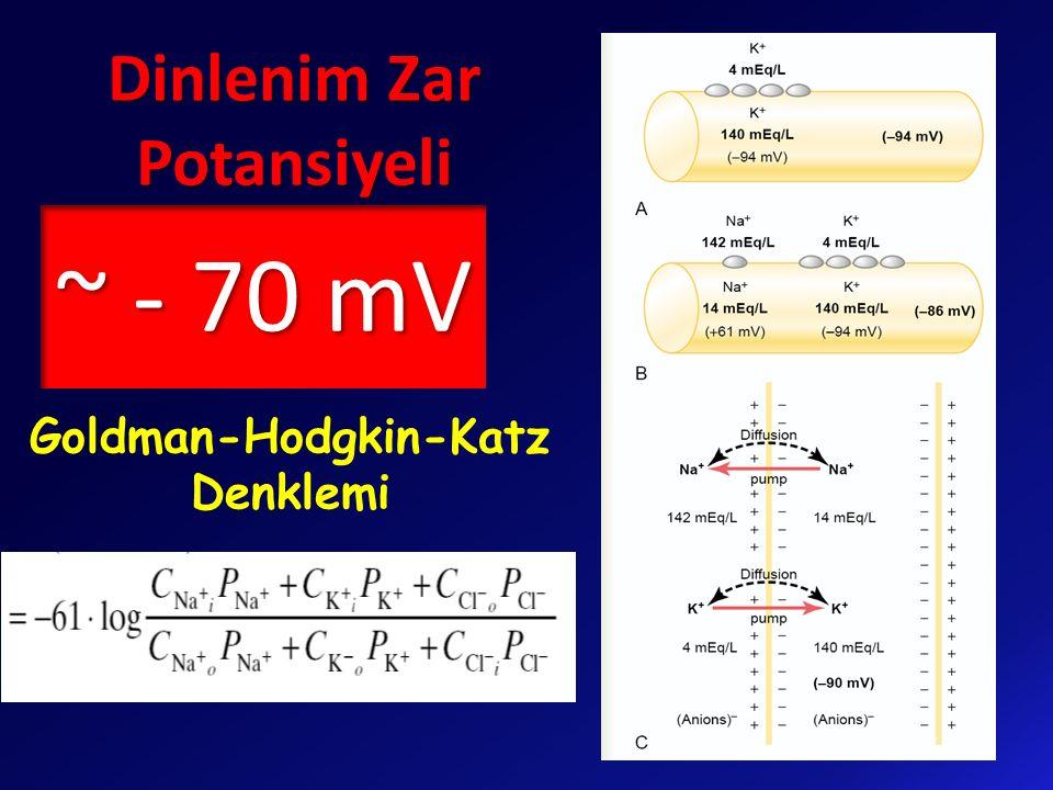 Goldman-Hodgkin-Katz Denklemi