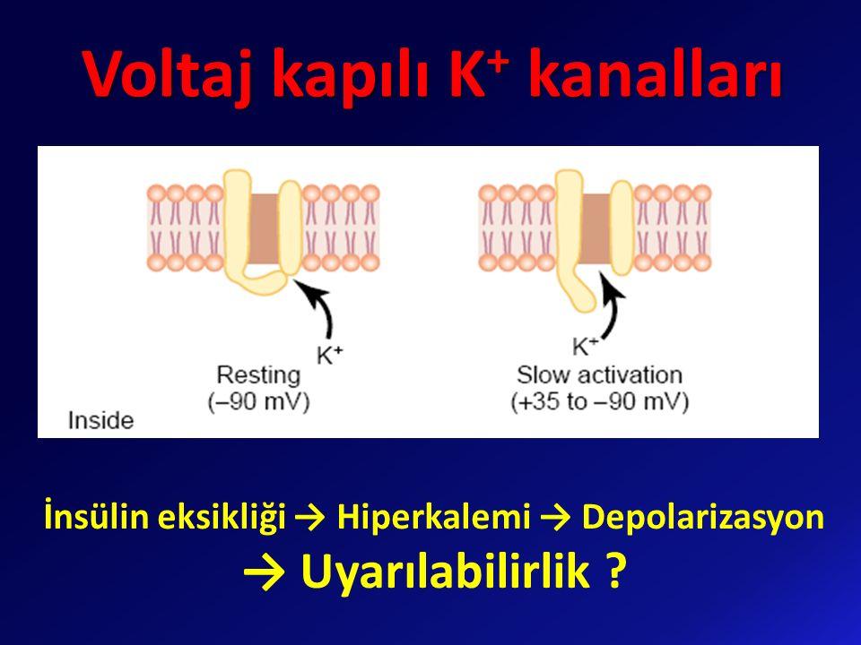 Voltaj kapılı K+ kanalları