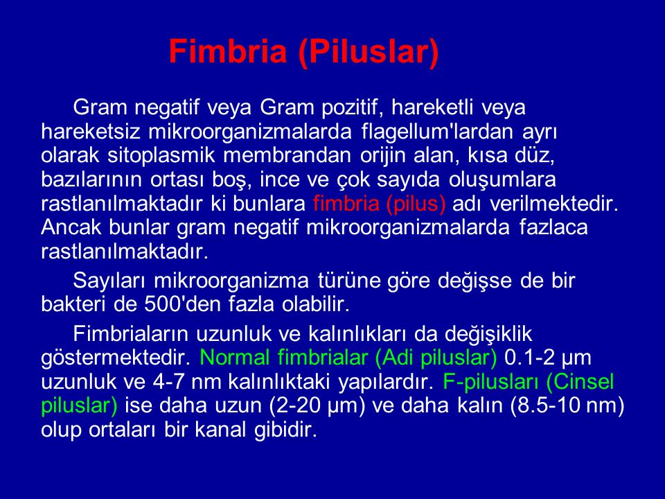 Fimbria (Piluslar)