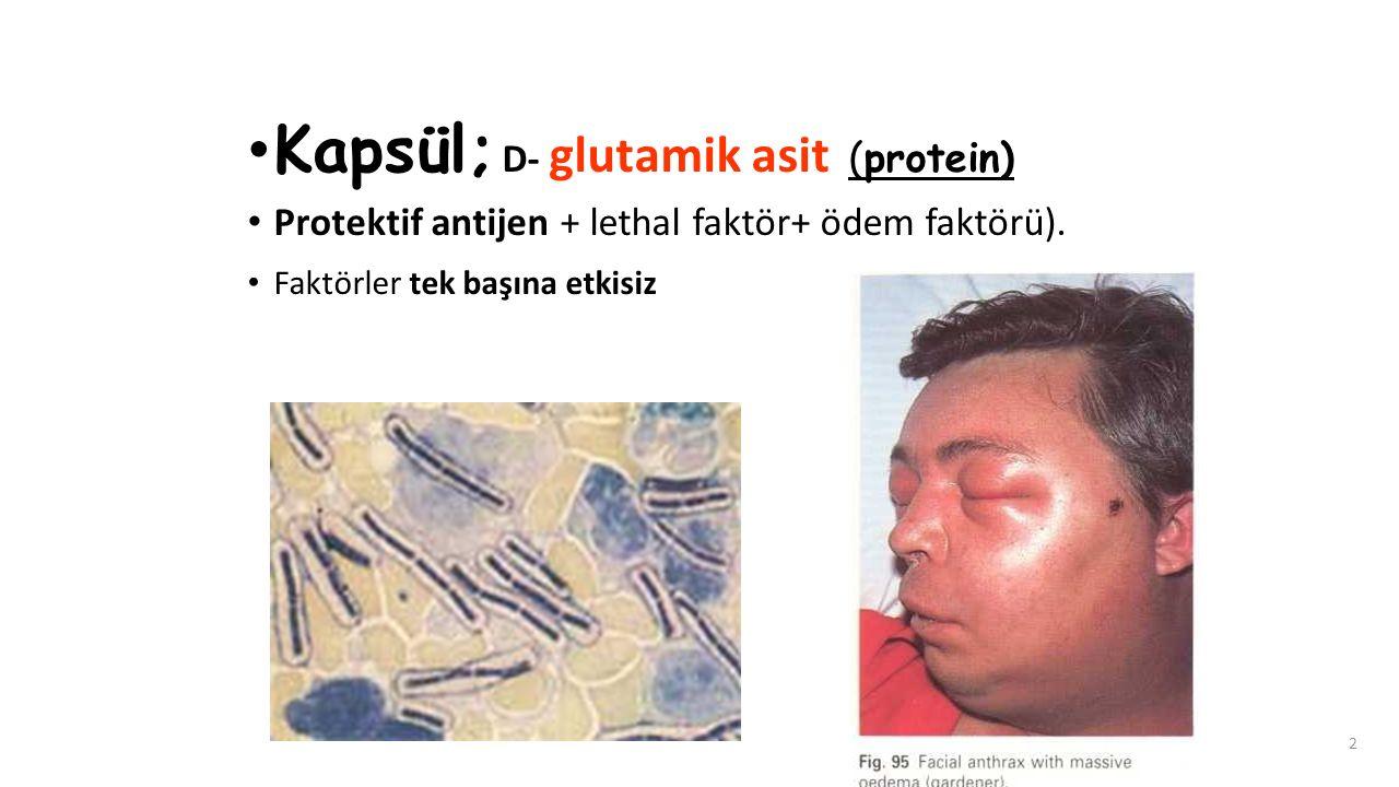 Kapsül; D- glutamik asit (protein)