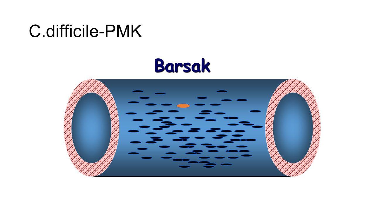 C.difficile-PMK Barsak