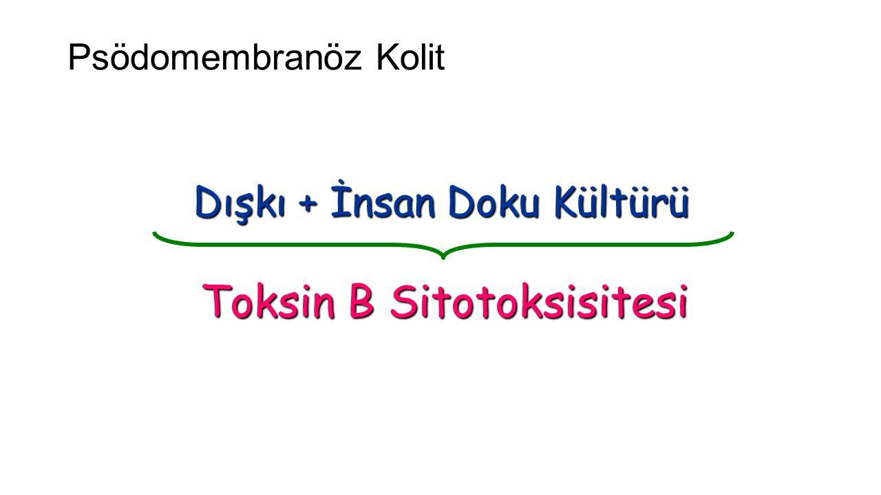 Psödomembranöz Kolit (C.difficile)