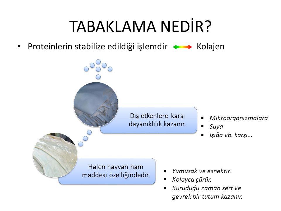 TABAKLAMA NEDİR Proteinlerin stabilize edildiği işlemdir Kolajen