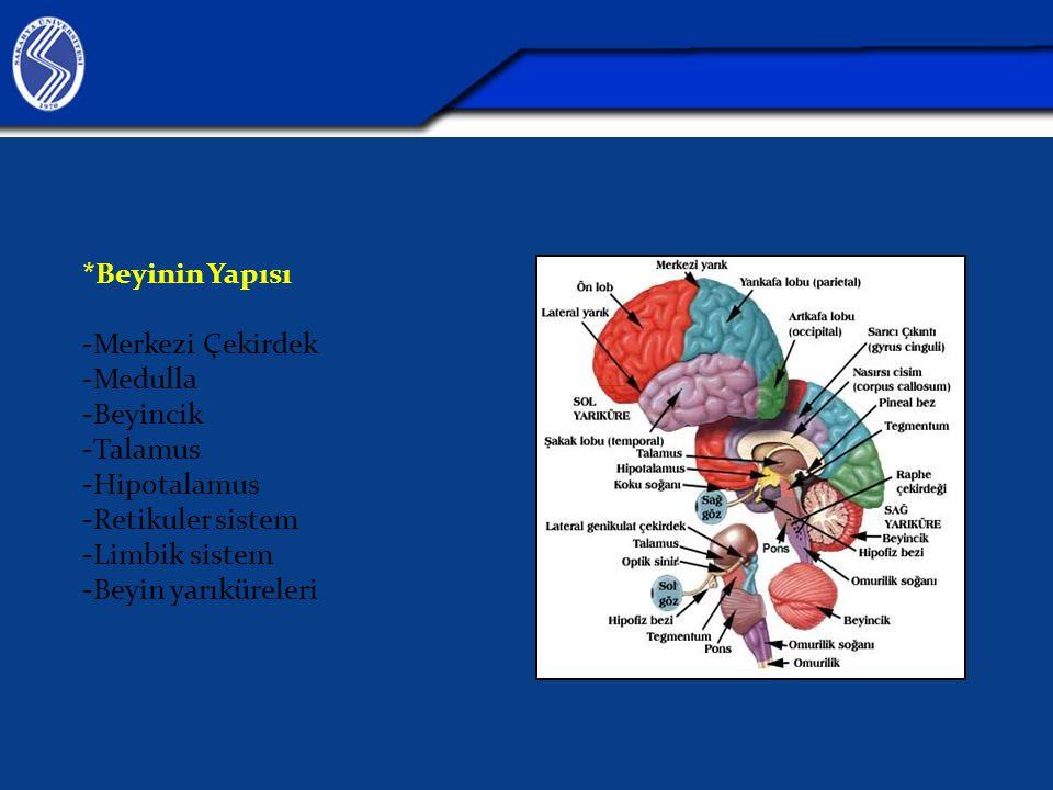 *Beyinin Yapısı -Merkezi Çekirdek. -Medulla. -Beyincik. -Talamus. -Hipotalamus. -Retikuler sistem.