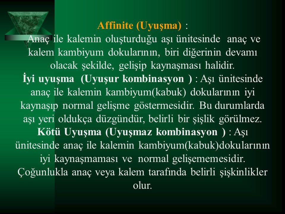 Affinite (Uyuşma) :