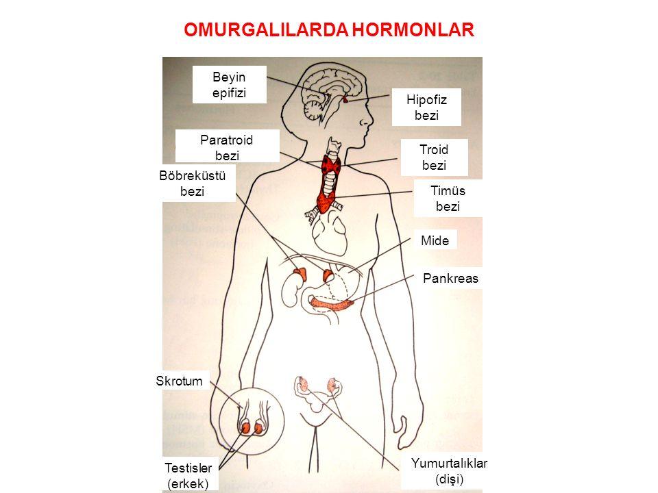 OMURGALILARDA HORMONLAR