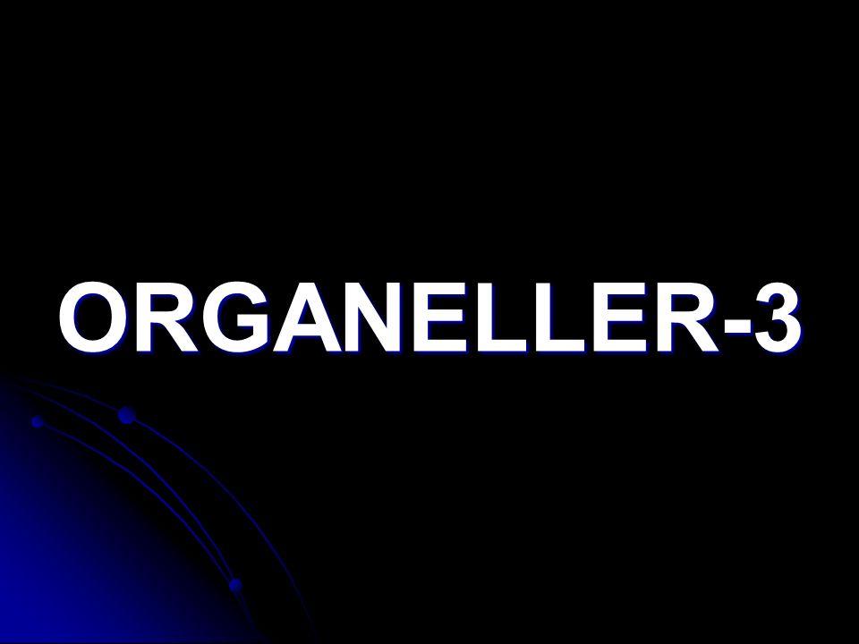 ORGANELLER-3