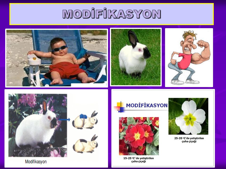 MODİFİKASYON