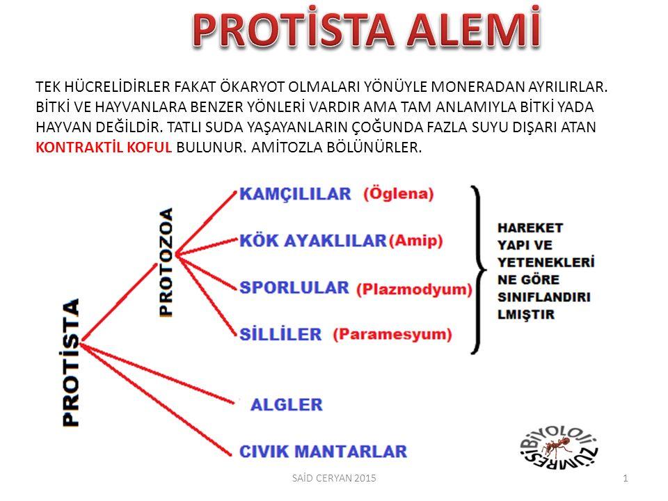 PROTİSTA ALEMİ