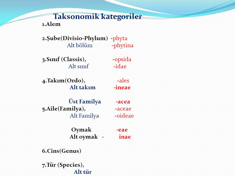 Taksonomik kategoriler