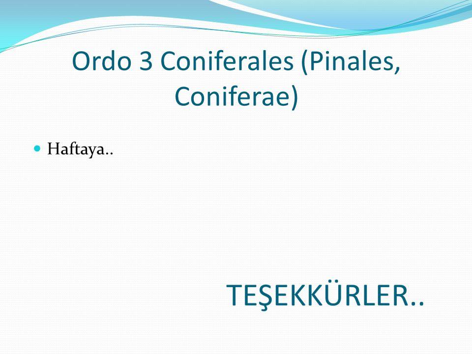 Ordo 3 Coniferales (Pinales, Coniferae)
