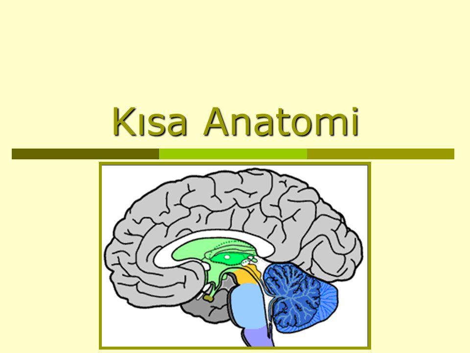 Kısa Anatomi