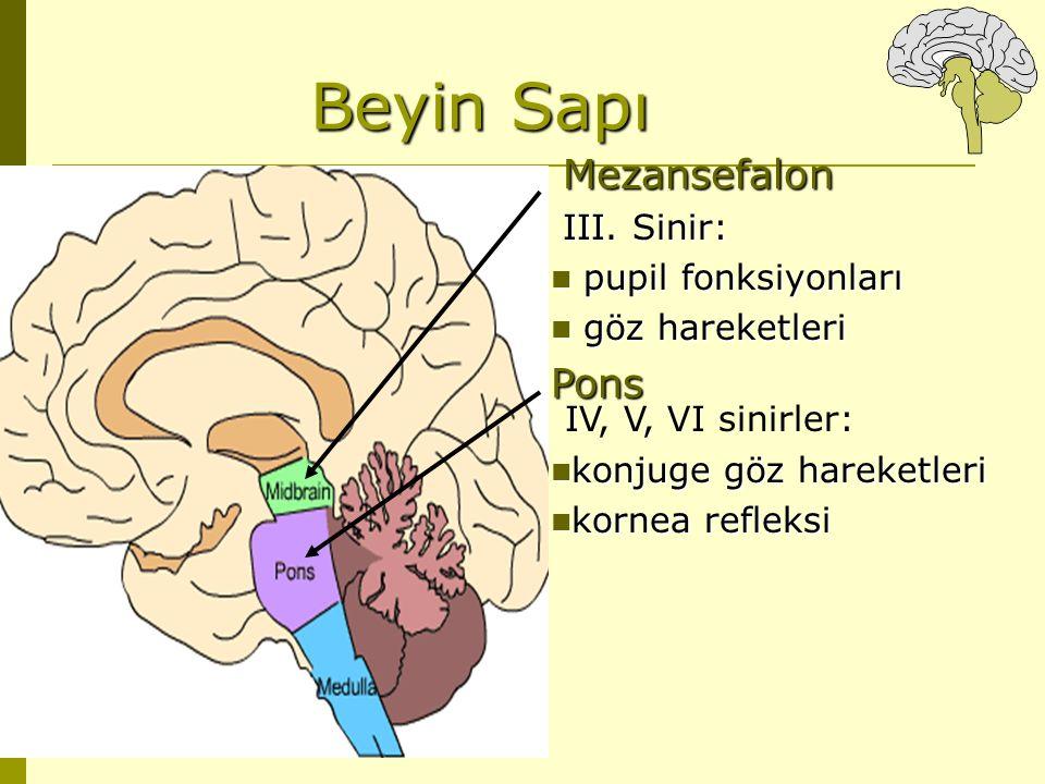 Beyin Sapı Pons IV, V, VI sinirler: Mezansefalon III. Sinir: