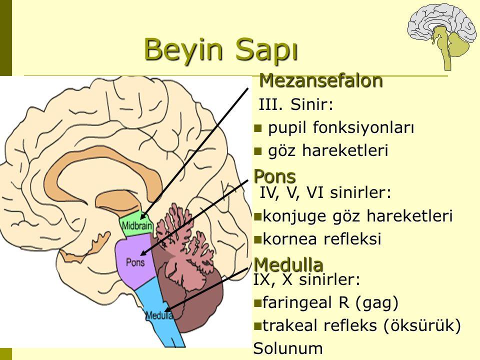 Beyin Sapı Pons IV, V, VI sinirler: Medulla Mezansefalon III. Sinir: