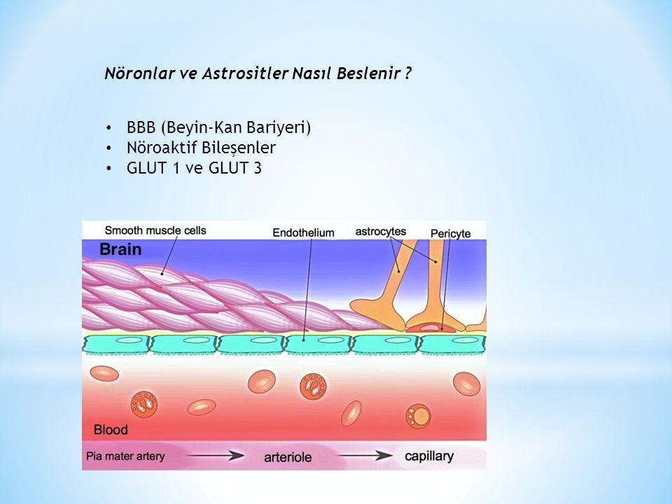 Nöronlar ve Astrositler Nasıl Beslenir