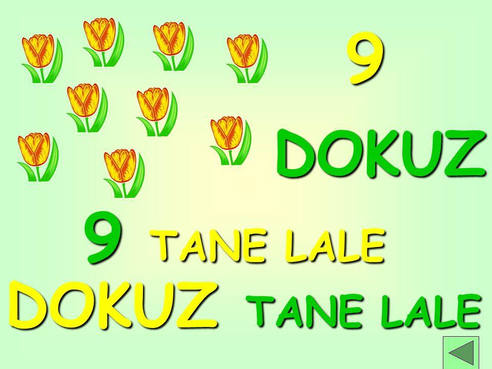 9 DOKUZ 9 TANE LALE DOKUZ TANE LALE