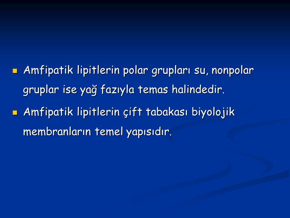 Amfipatik lipitlerin polar grupları su, nonpolar gruplar ise yağ fazıyla temas halindedir.