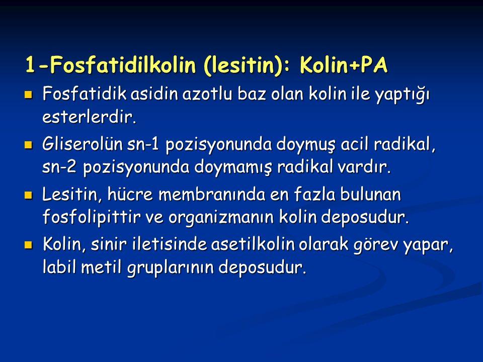 1-Fosfatidilkolin (lesitin): Kolin+PA