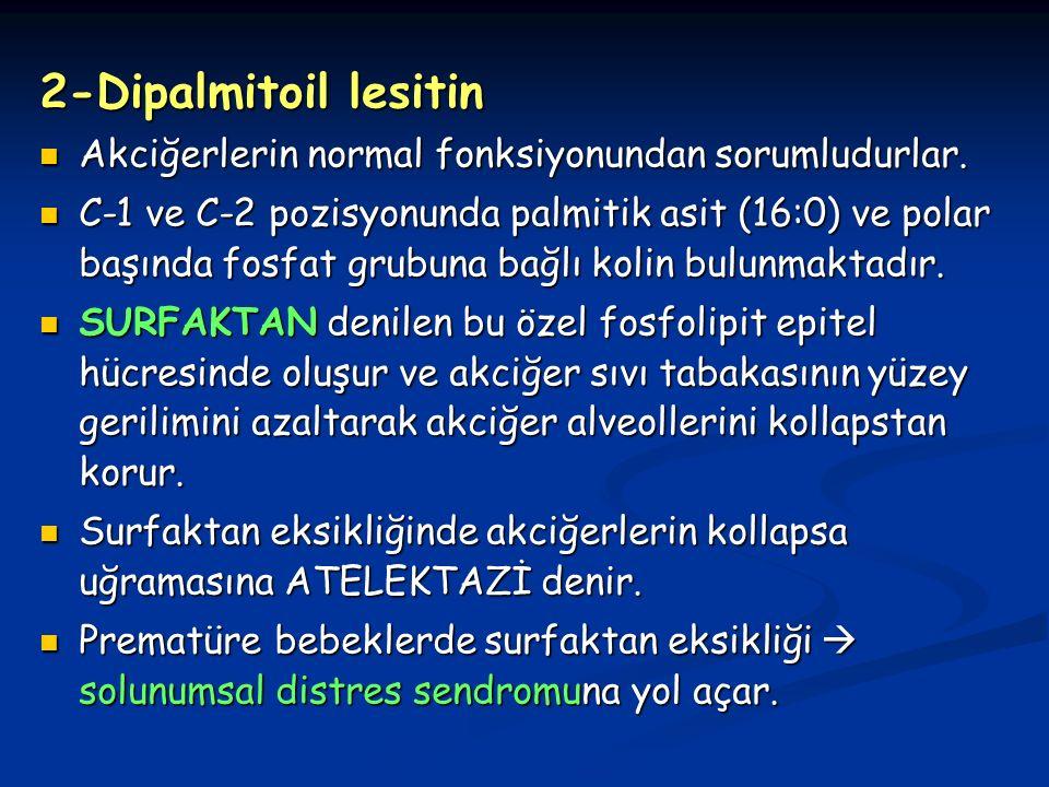 2-Dipalmitoil lesitin Akciğerlerin normal fonksiyonundan sorumludurlar.