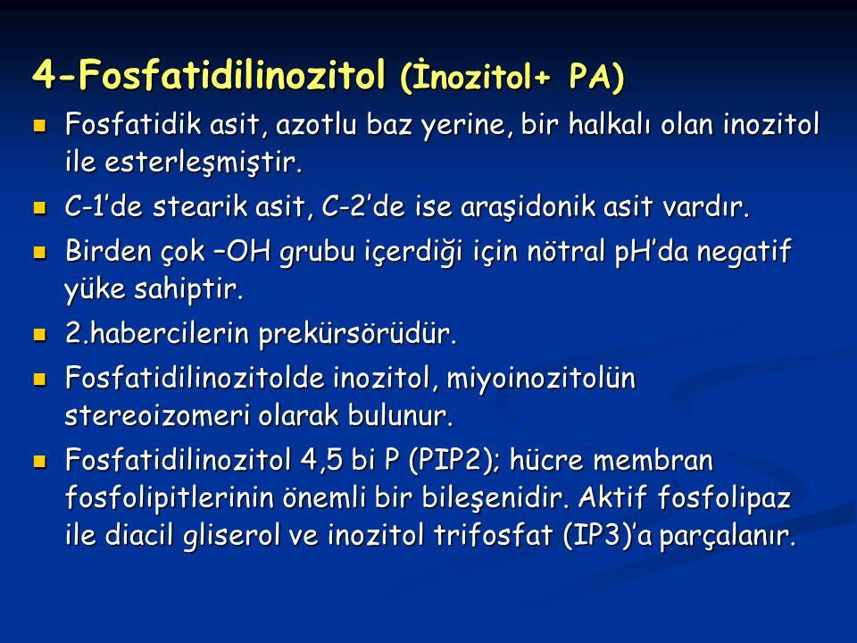 4-Fosfatidilinozitol (İnozitol+ PA)