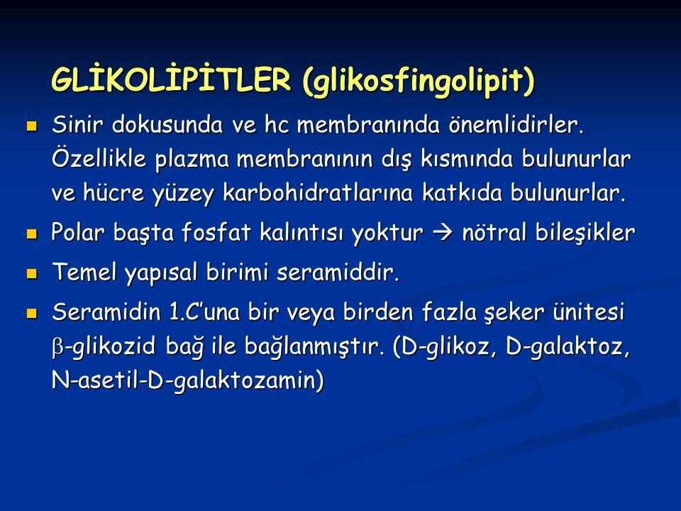 GLİKOLİPİTLER (glikosfingolipit)