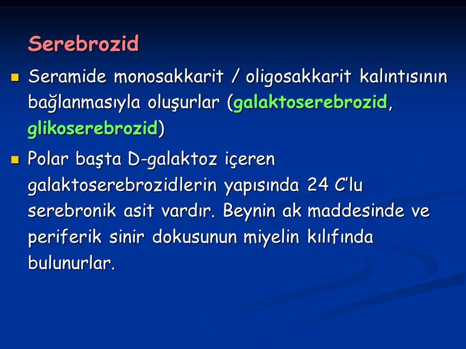 Serebrozid Seramide monosakkarit / oligosakkarit kalıntısının bağlanmasıyla oluşurlar (galaktoserebrozid, glikoserebrozid)