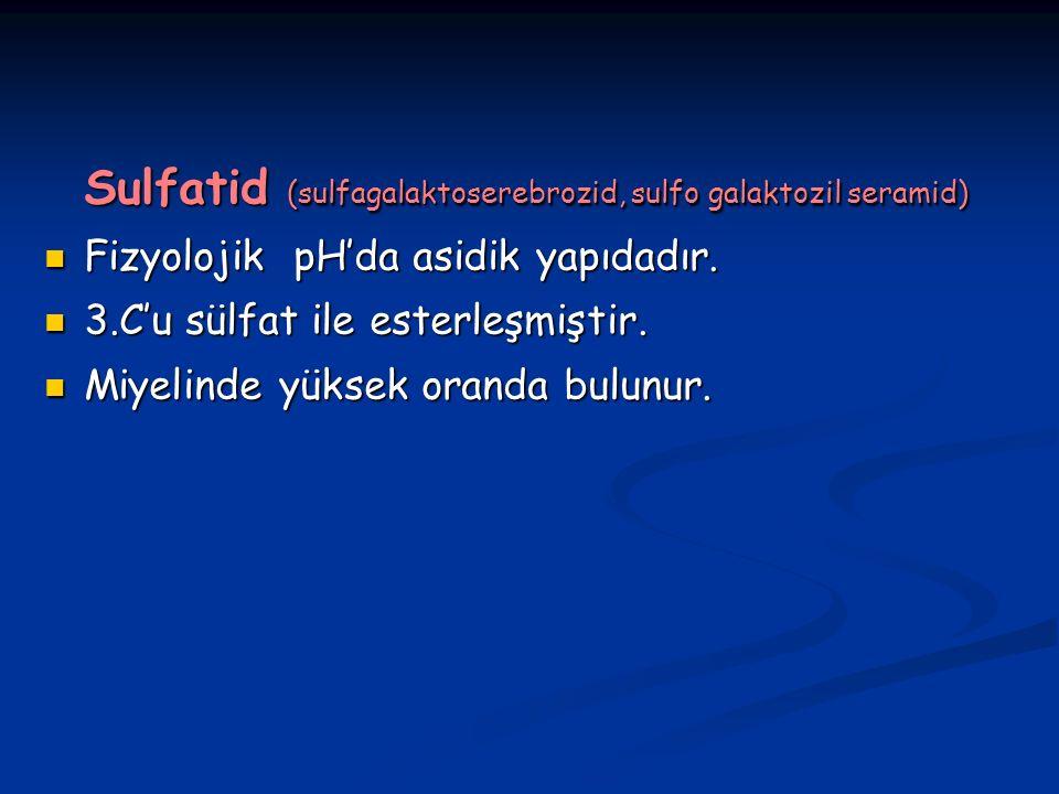 Sulfatid (sulfagalaktoserebrozid, sulfo galaktozil seramid)