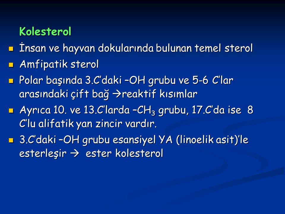 Kolesterol İnsan ve hayvan dokularında bulunan temel sterol
