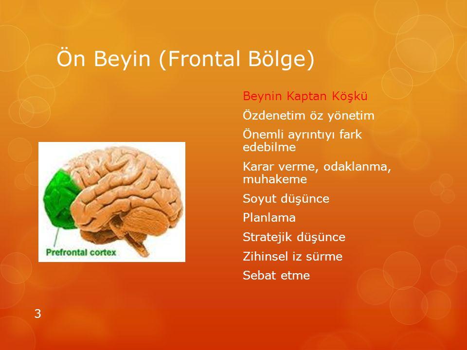Ön Beyin (Frontal Bölge)