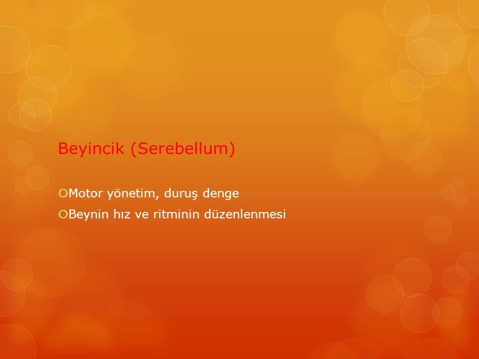 Beyincik (Serebellum)