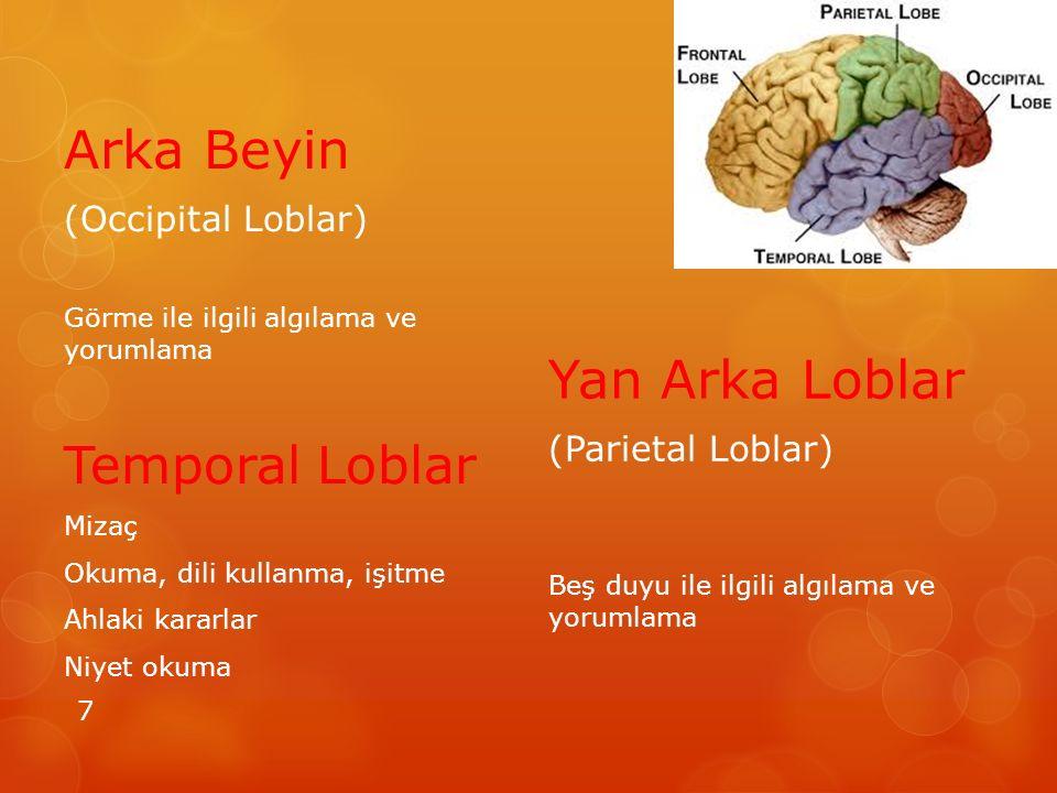 Arka Beyin Yan Arka Loblar Temporal Loblar (Occipital Loblar)