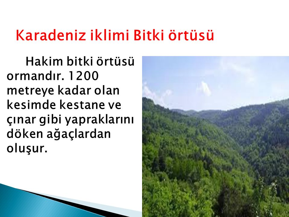 Karadeniz iklimi Bitki örtüsü