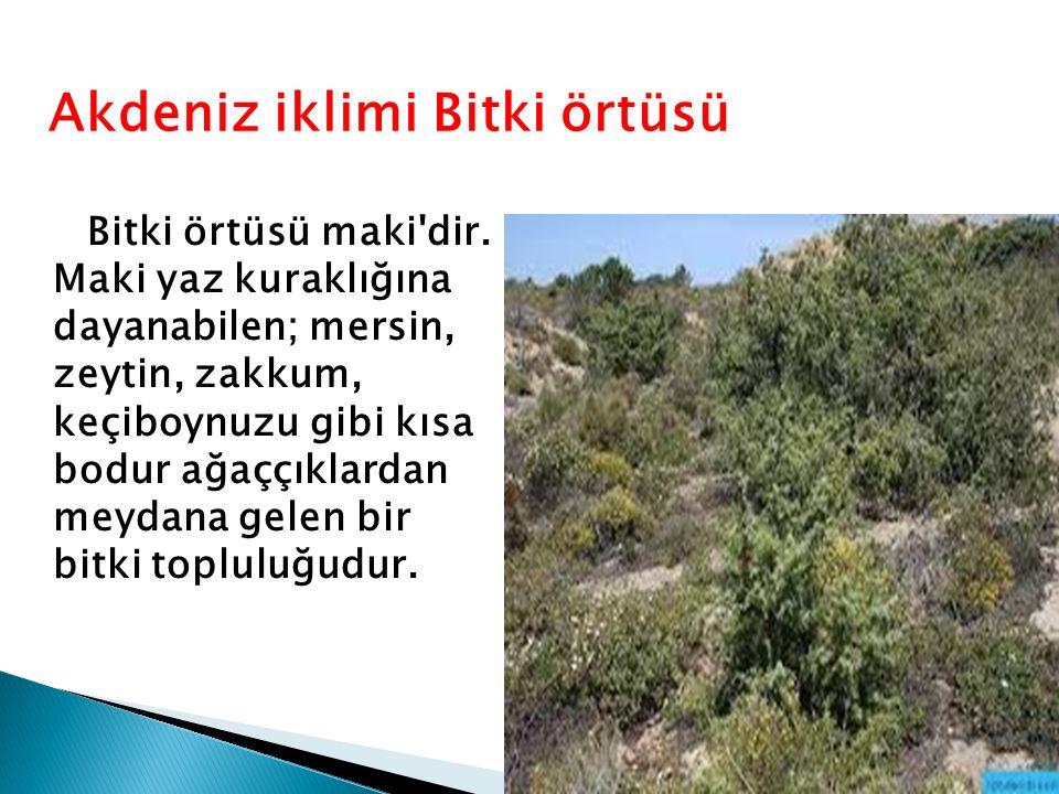 Akdeniz iklimi Bitki örtüsü