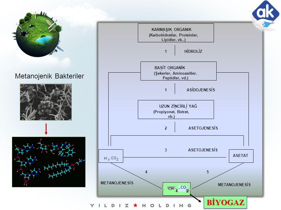 BİYOGAZ Metanojenik Bakteriler KARMAŞIK ORGANIK BİLEŞİKLER
