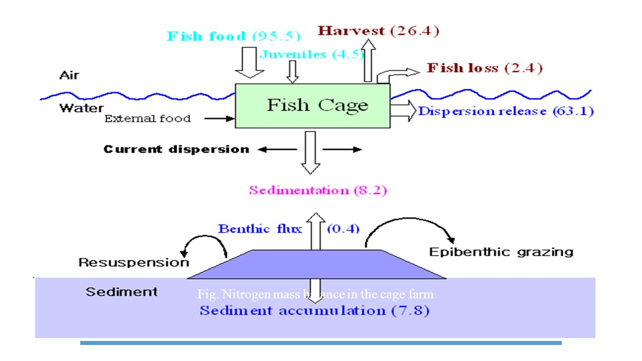 Fig. Nitrogen mass balance in the cage farm