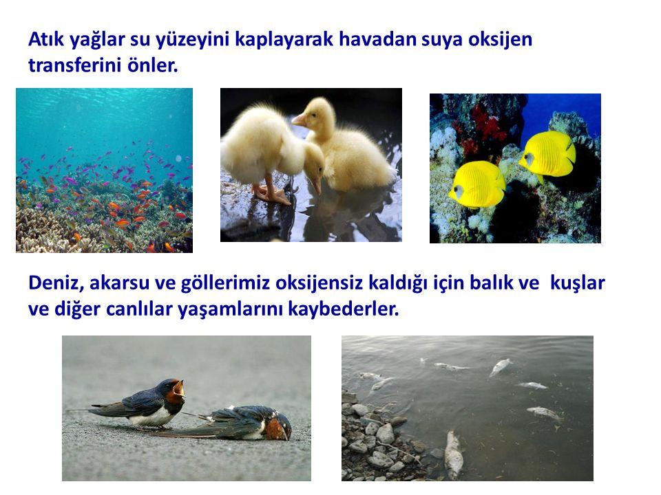 Atık yağlar su yüzeyini kaplayarak havadan suya oksijen transferini önler.